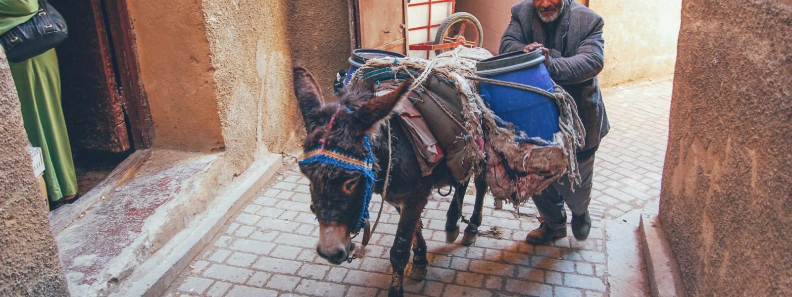 osiolek w maroku