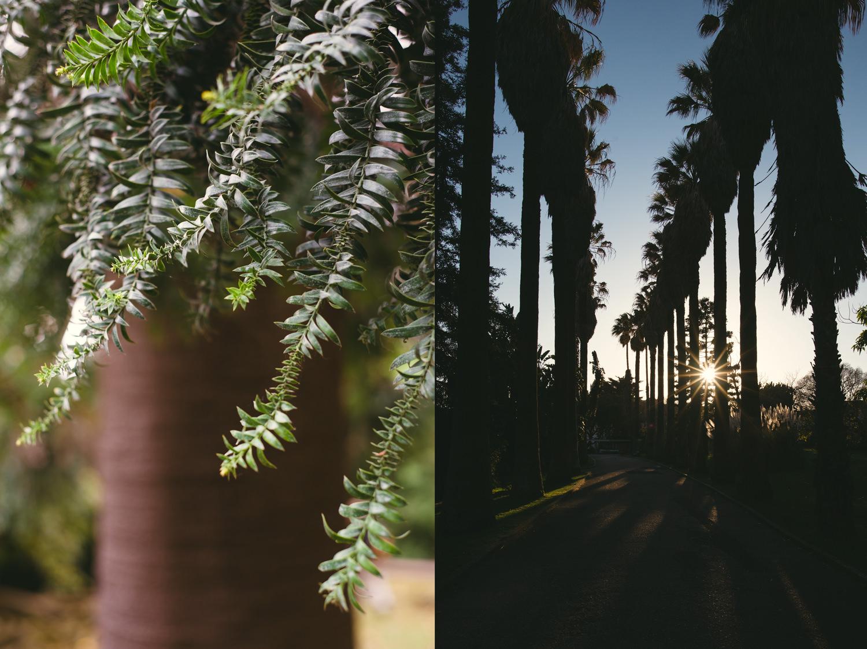 lizbona-palmy