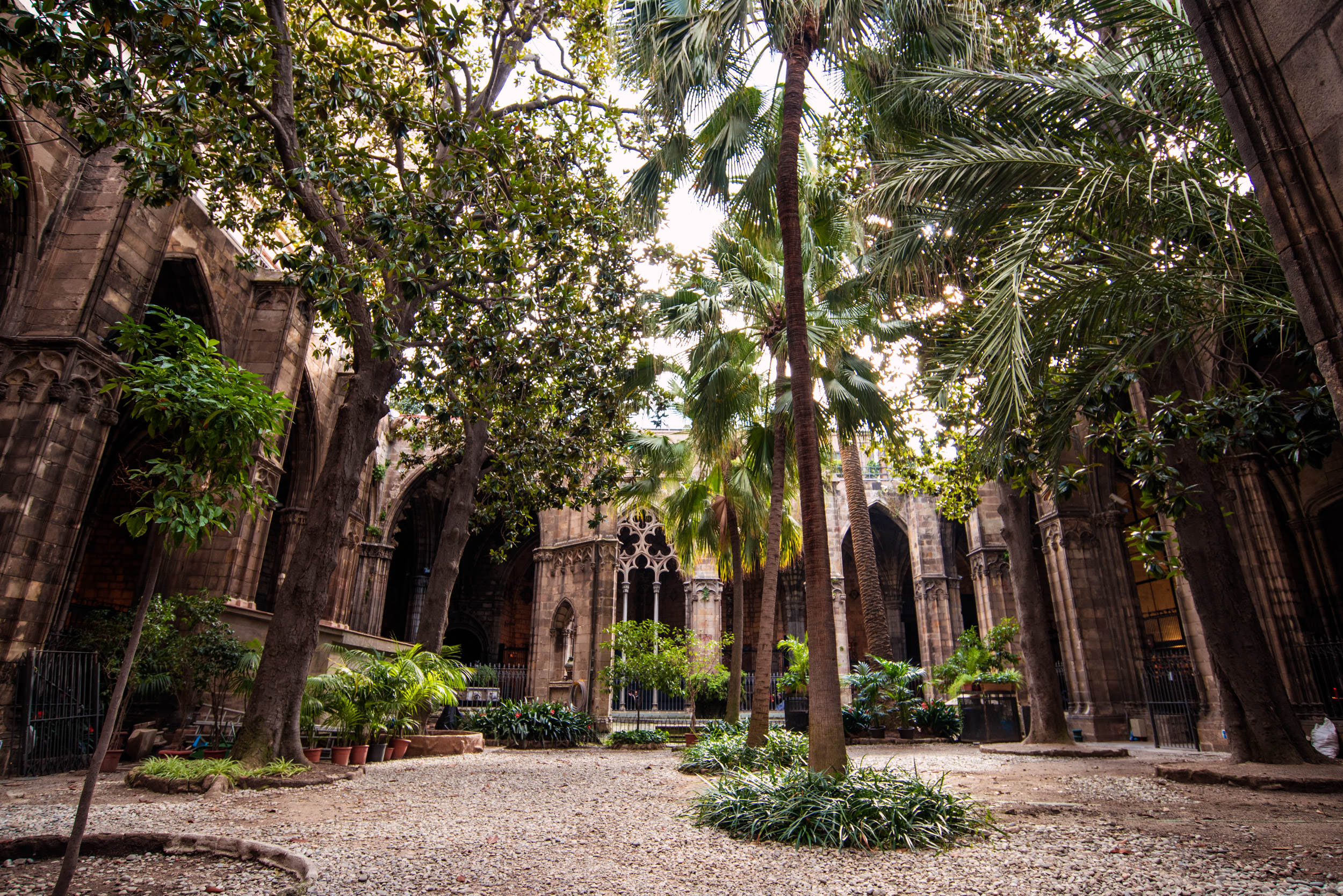katedra-w-barcelonie-palmy