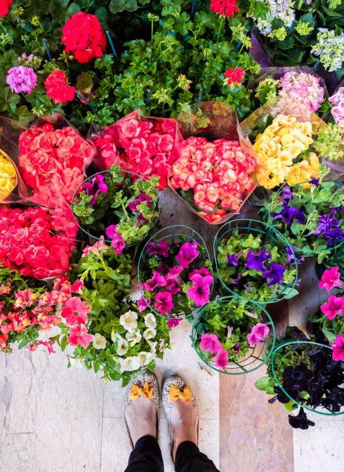 florencja-kwiaty