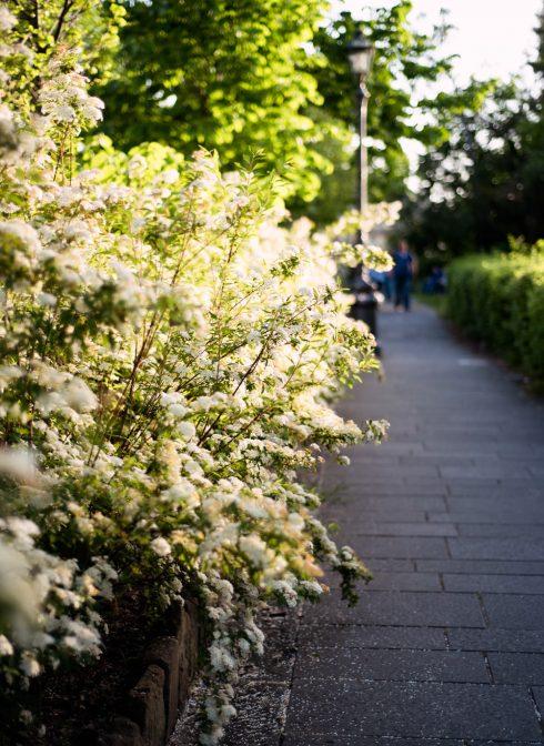 ogrod-florencja