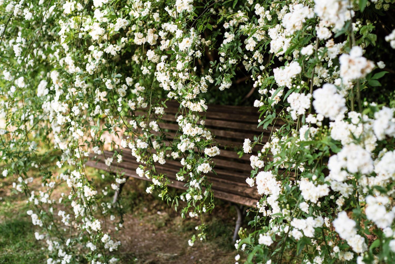 ogrod rozany