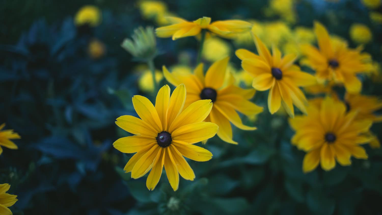 kwiaty na wyspie malgorzaty