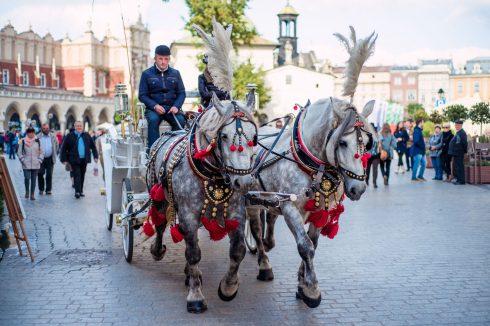 krakow-konie