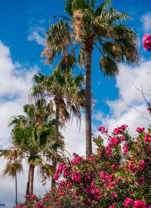 palmy teneryfa