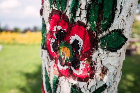 drzewo w zalipiu