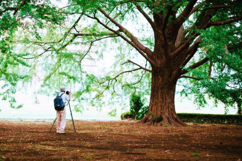 pan-fotografuje-drzewo-w-paku-jejku-jaki-kochany