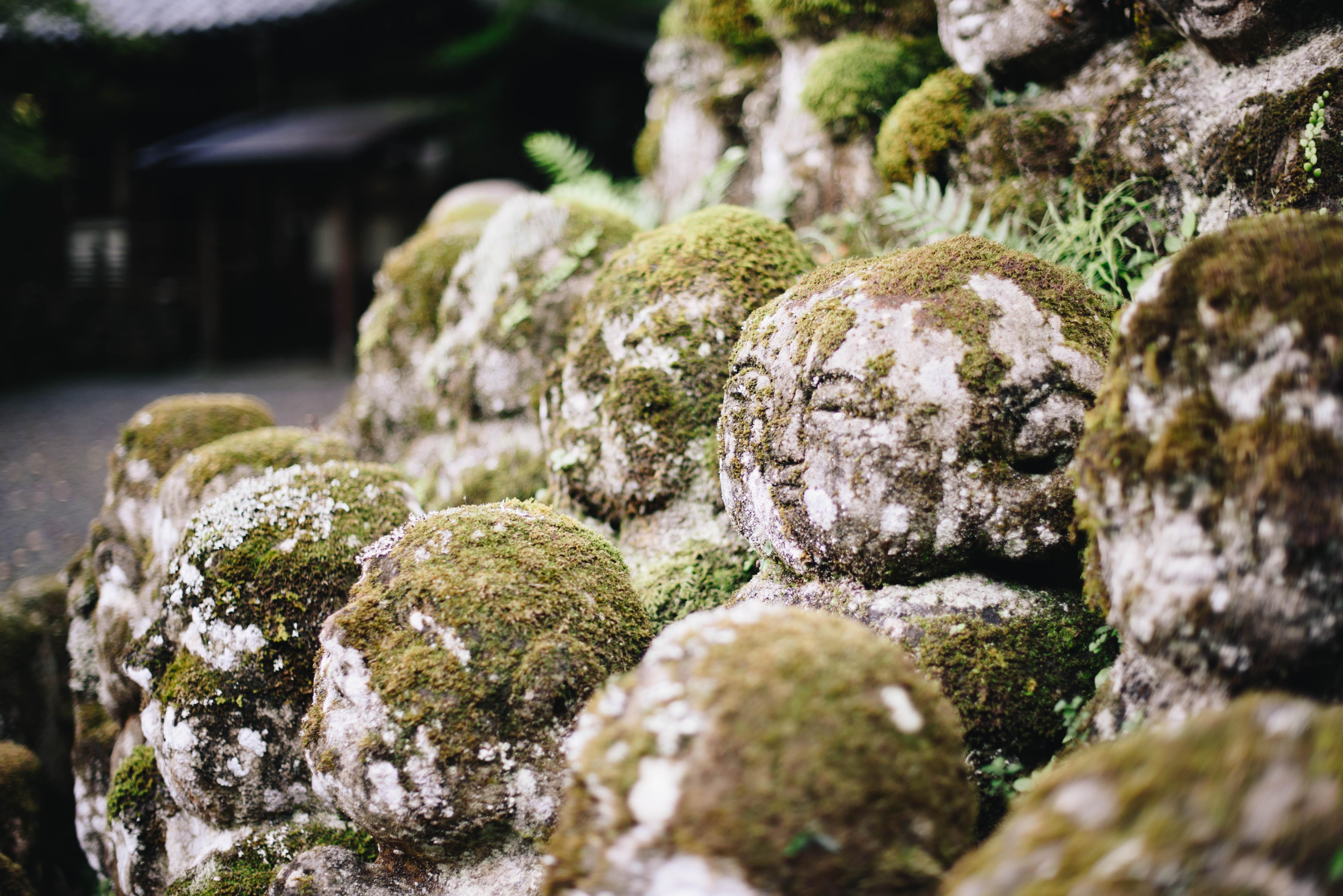 kioto-swiatynia