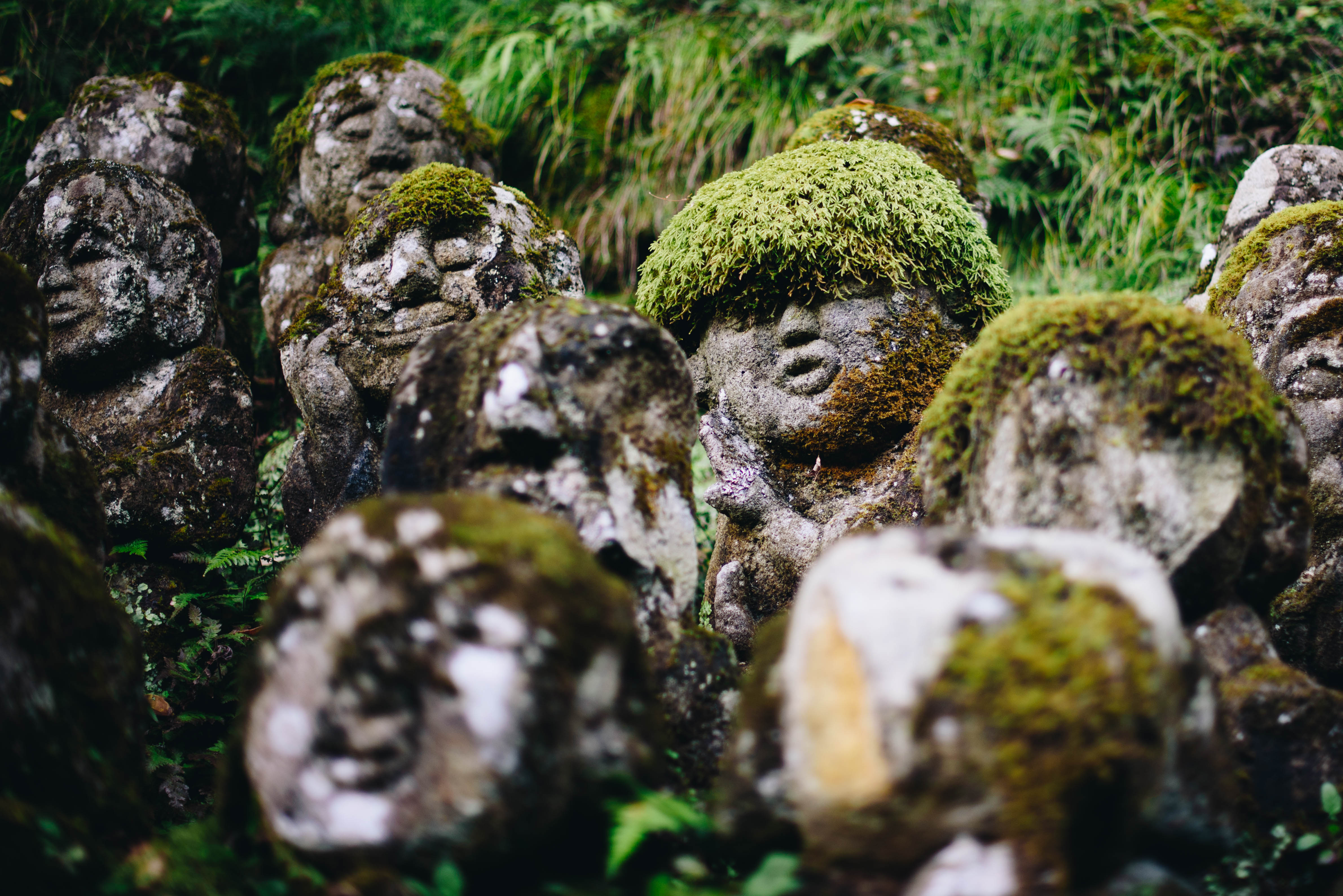 otagi-swiatynia-w-kioto