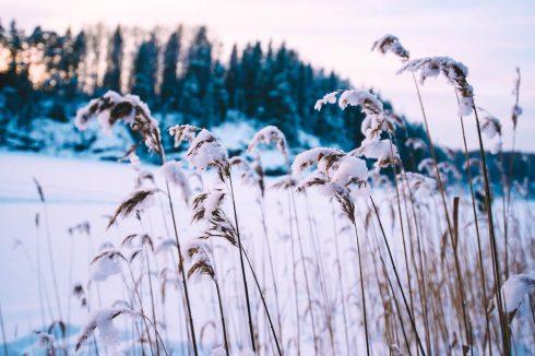 zdjecia zimowe