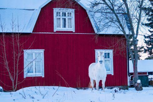 balans bieli zimą