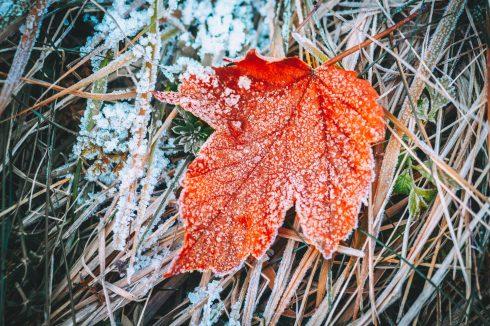 makro zdjecie zimowe