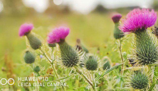 Huawei P10 – pierwsze wrażenia z testów aparatu!