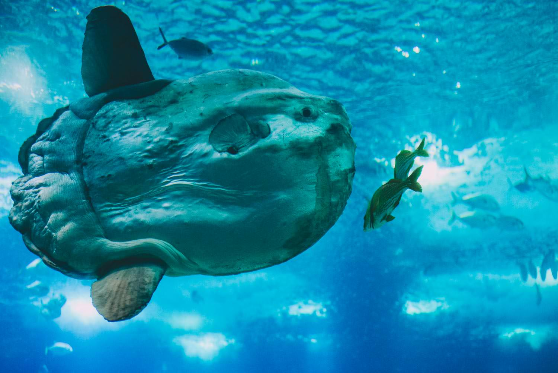 lizbona oceanarium