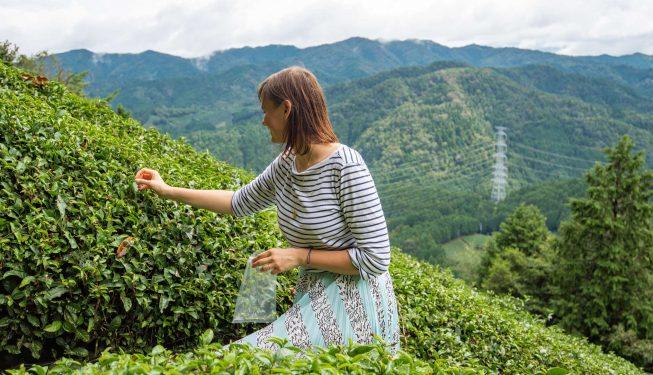 najlepsza-japonska-herbata